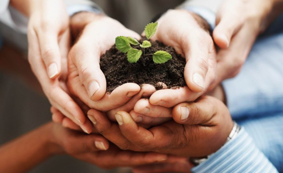embalaje sostenible origen