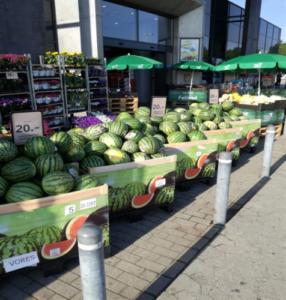 campaña sandía y melon greenbox